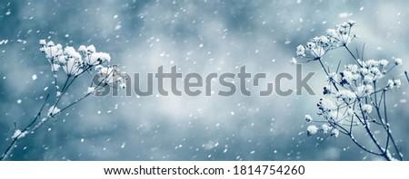 Pozostawia jesienią kolor pokryty śniegu dać Zdjęcia stock © meinzahn