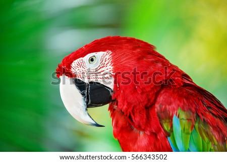 Stock photo: Colorful portrait of Amazon macaw parrot against jungle. Side vi