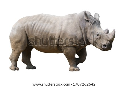 rhinoceros Stock photo © mariephoto
