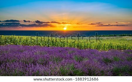 sunset flower meadow and ocean spring colors Stock photo © kikkerdirk