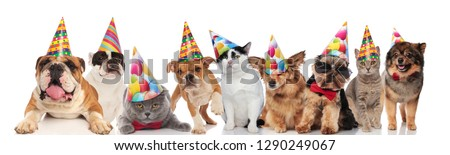 team of happy party pets on white background Stock photo © feedough