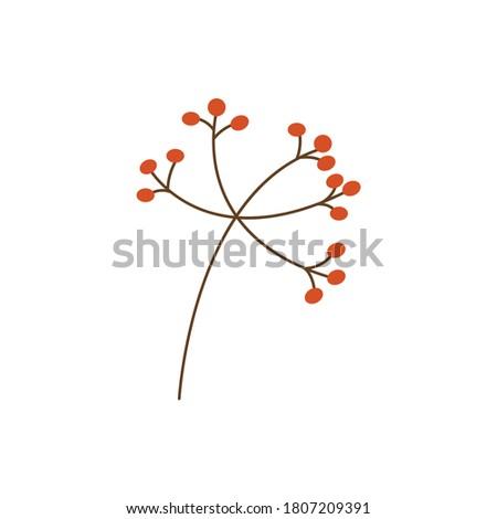 a sprig of Rowan berries Stock photo © butenkow