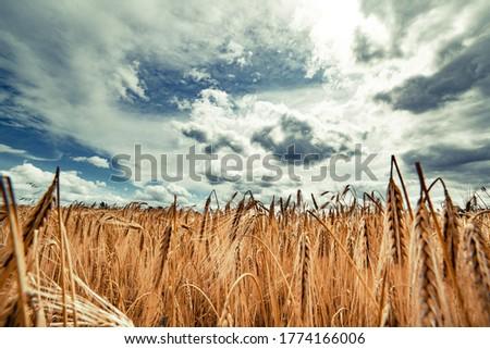 Landschap mooie heuvels regenachtig zomer dag Stockfoto © Lizard