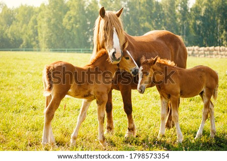 brown horse with a foal  Stock photo © OleksandrO