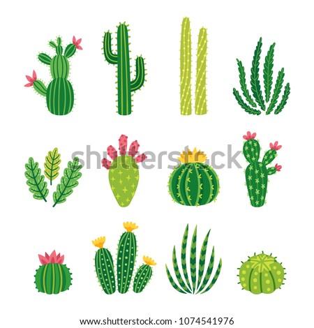 Cactus  Stock photo © asturianu