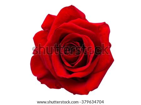 Piros rózsa gyönyörű cseppek harmat izolált esküvő Stock fotó © fyletto