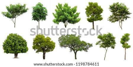 Set of isolated tree stock photo © colematt