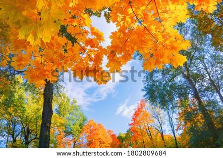 field maples sky autumn stock photo © vavlt