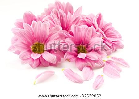 Cartão postal rosa flores texto gradiente Foto stock © adamson