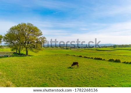 ferme · viol · domaine · écologie · environnement - photo stock © photocreo