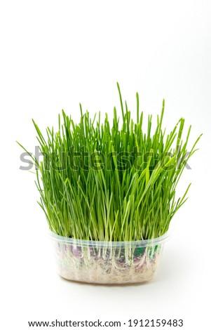 Green wheat grass with dewdrops  Stock photo © meinzahn