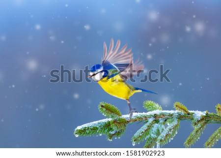 Beautiful winter day Stock photo © Nejron