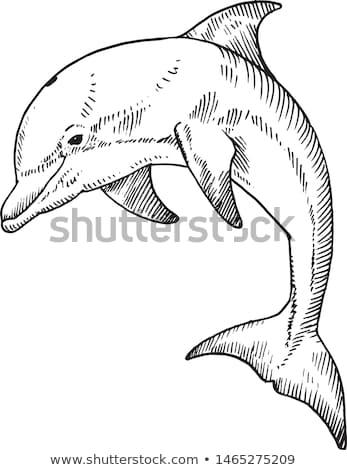 Dauphins belle profonde bleu océan nature Photo stock © leedsn