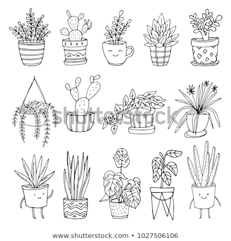 Hand drawn Set of cactus and herbs plants in pot illustration.  Stock photo © Margolana