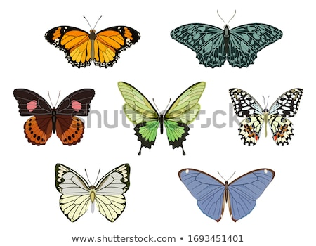 Butterfly. Isolated color icon. Animals vector illustration Stock photo © Imaagio