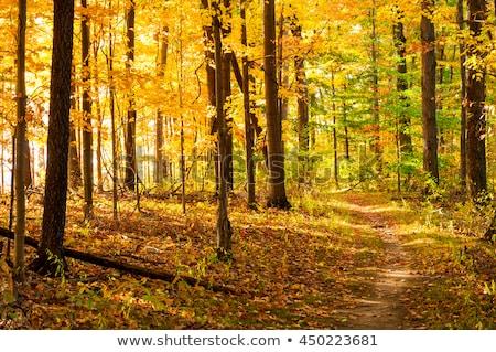 秋 オハイオ州 森 地下鉄 公園 草 ストックフォト © Freelancer