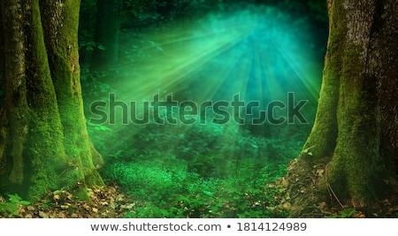 サンビーム 妖精 森林 午前 熱帯 煙 ストックフォト © smithore