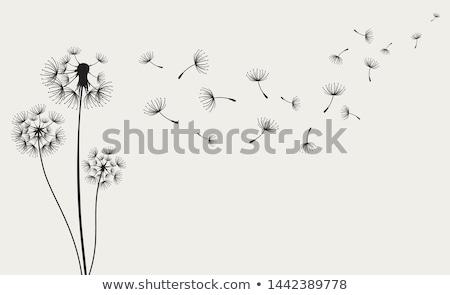 dandelion · sementes · florescimento · planta · cabeça - foto stock © smithore