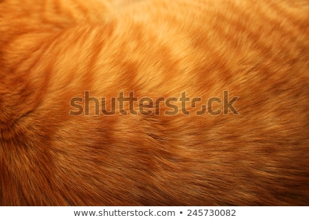 Close-up of ginger cat fur for texture or background Stock photo © ozaiachin