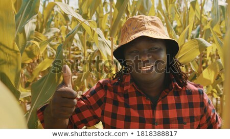 Közelkép mosolyog férfi kukoricamező búza növények Stock fotó © photography33