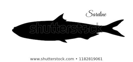 Silhouette of sardine Stock photo © perysty