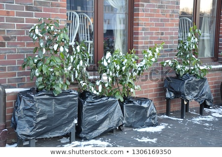 Plant covered with frost Stock photo © nature78