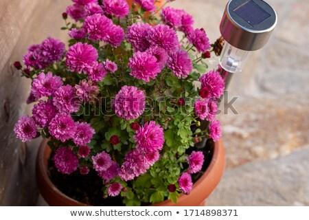 batterij · zonnepaneel · geïsoleerd · witte · 3d · render · huis - stockfoto © stootsy