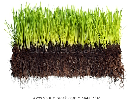 isolated Roots and grass stock photo © mike_expert