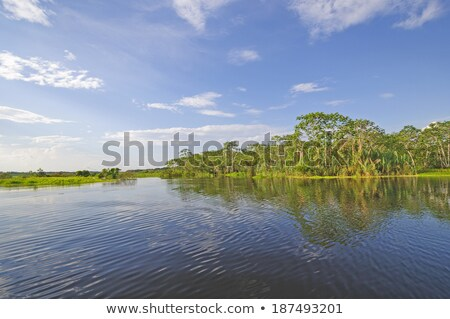 Blackwater tributary in the Amazon on a Sunny Day Stock photo © wildnerdpix