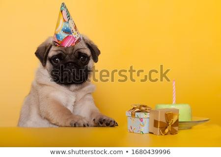 verjaardag · puppy · cute · ballonnen · partij · hoed - stockfoto © balasoiu