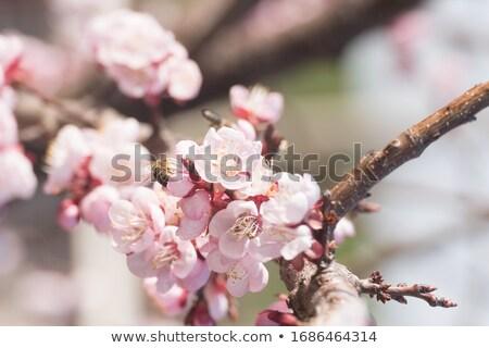 Large Pink Flower Stock photo © rhamm