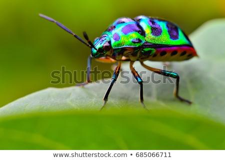 バグ 葉 緑 赤 マクロ バグ ストックフォト © taden