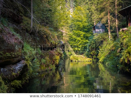River Kamenice in Czech Switzerland stock photo © ondrej83