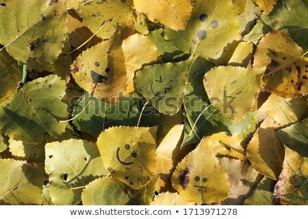 happy smiley with green leaves stock photo © shawlinmohd