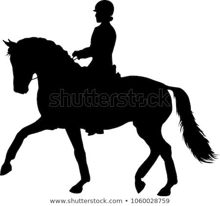Stock fotó: Ló · sziluettek · sebesség · sziluett · fut · verseny