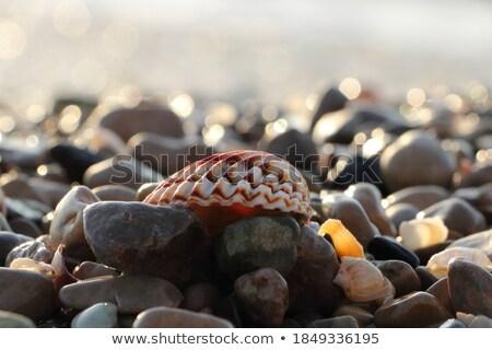 волна · работает · воды · каменные · падение · чистой - Сток-фото © kimmit