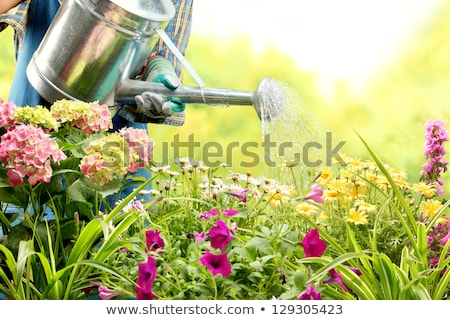 woman watering flowers in garden stock photo © deandrobot