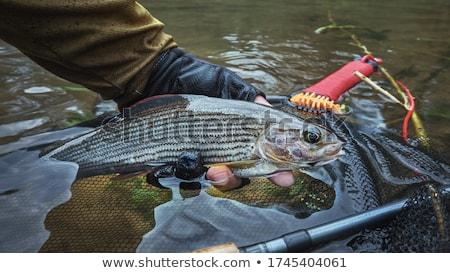 Flyfishing Stock photo © Hofmeester