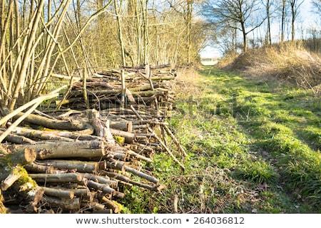 落葉性の · 森林 · ツリー · 木 · 雨 · 光 - ストックフォト © stryjek