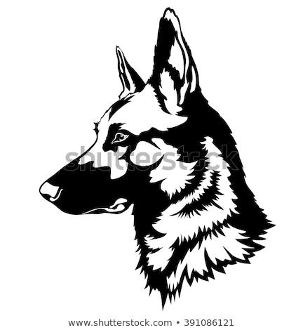 vigyázat · kutya · veszély · díszállat · őr · illusztráció - stock fotó © bigalbaloo