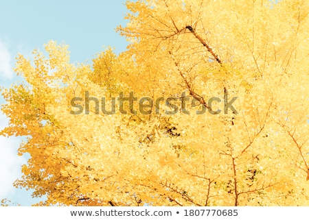 Autumn leaves in the blue sky stock photo © kravcs