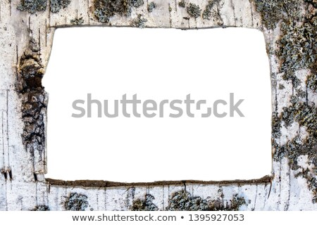 Frame made of birch bark Stock photo © Valeriy
