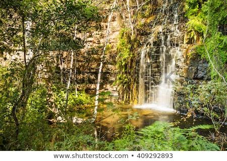 Moremi Gorge Botswana Africa Stock photo © THP
