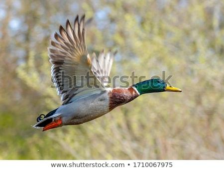 Homme natation lac eau rivière tête Photo stock © papa1266