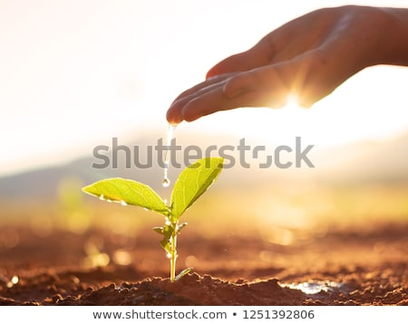 Earth with a growing plant Stock photo © bluering