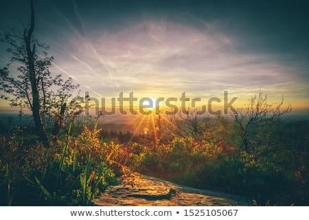 Świt góry drzew pierwszy plan złoty Zdjęcia stock © meinzahn