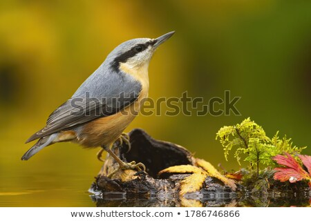 A bird above the stump Stock photo © bluering