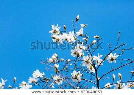 foto · hermosa · árbol · maravilloso · pequeño - foto stock © massonforstock