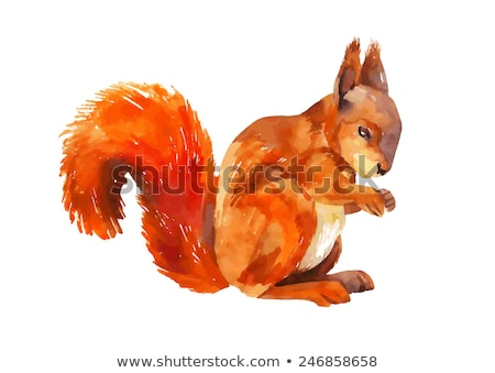 watercolor squirrel hand drawn vector stock photo © mamziolzi