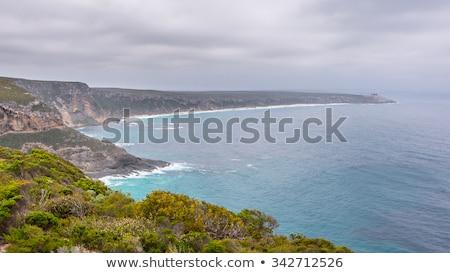 tengerparti · tájkép · kenguru · sziget · üldözés · park - stock fotó © dirkr
